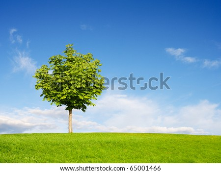 Chestnut Tree on field - stock photo