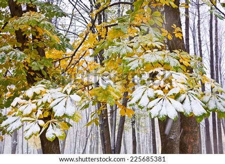 Chestnut Tree under snow in autumn park - stock photo