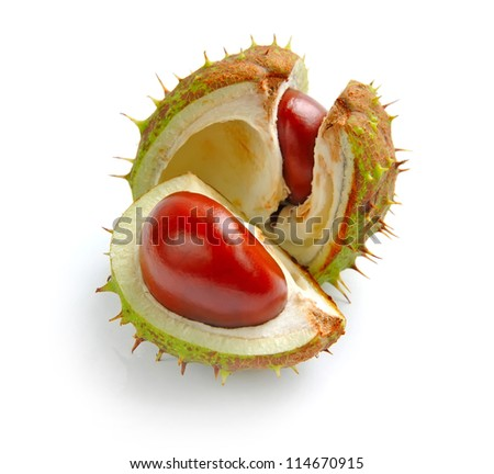 Chestnut with crust on a white background - stock photo