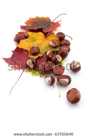Chestnuts and autumn leafs on white background