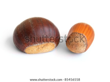 Chestnuts and hazelnuts - isolated on white - stock photo