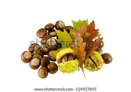 chestnuts autumn composition and sear leaves isolated on white background - stock photo