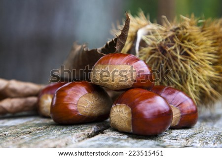 chestnuts closeup on natural background - stock photo