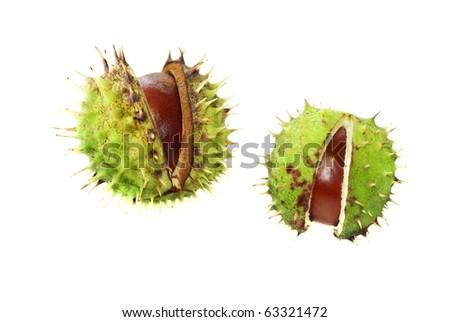 Chestnuts husk isolated on white - stock photo