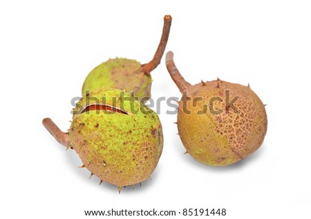 Chestnuts in the shell isolated - stock photo