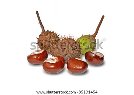 Chestnuts isolated on white. - stock photo