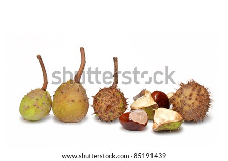 Chestnuts isolated on white. Be special, not like other. - stock photo