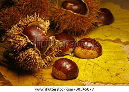 chestnuts on leaf - stock photo