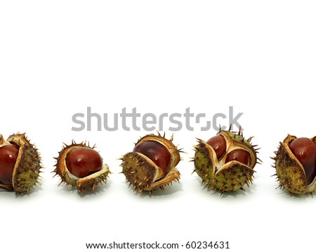 Chestnuts on the white background - stock photo