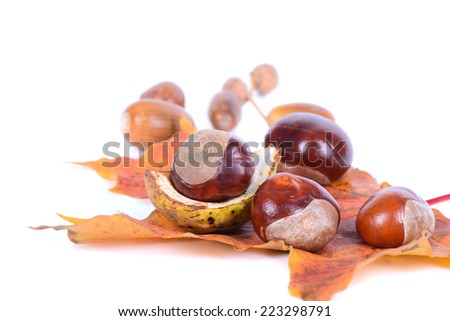 Chestnuts with autumn maple leaves - stock photo