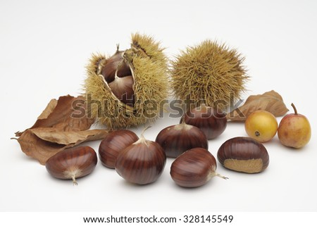 chestnuts with curls on a white background