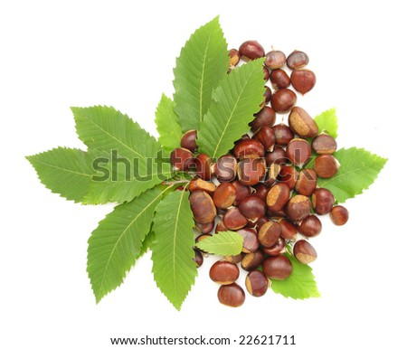 Chestnuts with leaves