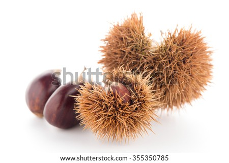 Chestnuts with shell isolated on white background.