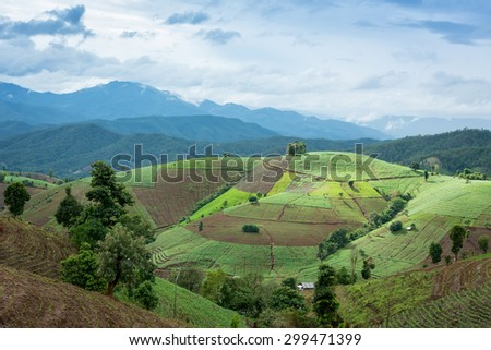 chiang mai Rice terraces Thailand landscape. - stock photo