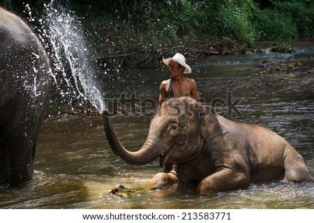 CHIANG MAI, THAILAND - Aug. 24: Daily elephants bath at The Mae-Pin Elephant Camp, mahout bath and clean the elephants in the the river , August 24, 2014 in Chiangmai, Thailand. - stock photo