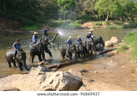 CHIANG MAI, THAILAND - JAN. 29:  Elephant drivers, known as mahouts, delight tourists with elephant antics following their bathing at Maetaman Elephant Camp on January 29, 2010 in Chiang Mai Thailand. - stock photo