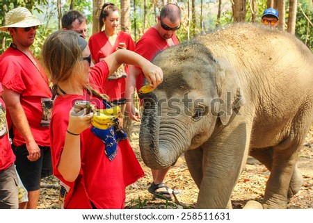 CHIANG MAI, THAILAND - MARCH 7 : People can experience the lifestyle of elephants in their natural habitat (no hook, no chain) on MARCH 7, 2015 in Chiang Mai, Thailand.