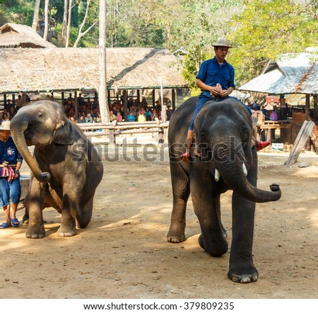 Chiangmai ,Thailand - February 20 : mahout ride elephant and elephant is dancing on February 20 ,2016 at Mae Sa elephant camp ,Chiangmai ,Thailand