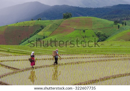 Chiangmai , thailand - July 18,2014 : Unidentified Hmong man and woman with rice field terrace background on July 18 ,2014 Mae-Jam Village , Chaingmai Province , Thailand - stock photo