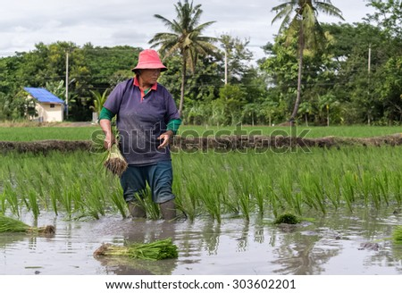 chiangmai, Thailand-JULY 9,2014:women  and baby rice in hand at