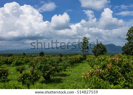 ChiangMai, Thailand. October, 15-2016: The agricultural field has located in rual area surrounded by white cloundscape and mountainious background
