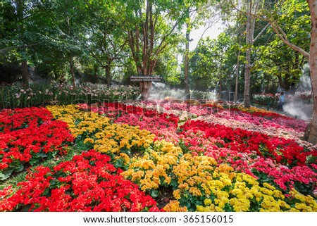 CHIANGRAI,THAILAND - JANUARY ,20 : The Colorful flower garden in winter At The Chiangrai City of Beautiful Flowers And Music In The Park Festival .THAILAND JANUARY,20 2016