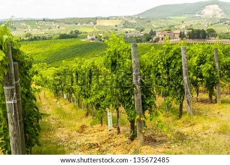 Chianti (SIena, Tuscany, Italy) - Vineyards at a summer afternoon - stock photo