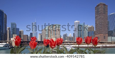 Chicago city view with red tulips on front - stock photo
