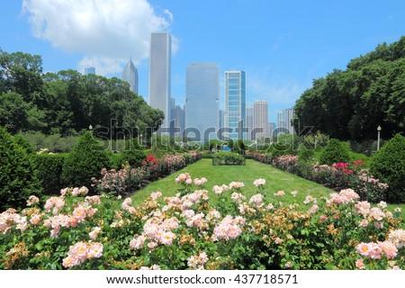 Chicago skyline seen from rose garden in Grant Park. - stock photo