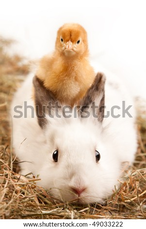 chick and bunny - stock photo