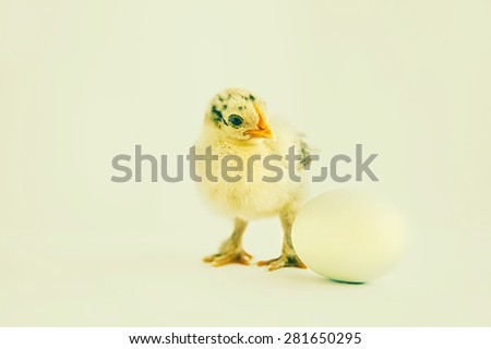 chick and egg - stock photo