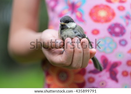 chick bird in the hand at the girl - stock photo