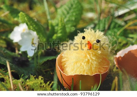 chick in egg shell hatching in grass
