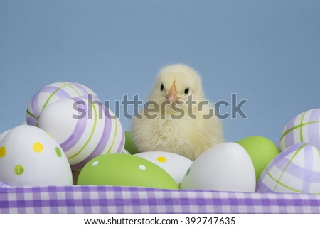 Chick on eggs