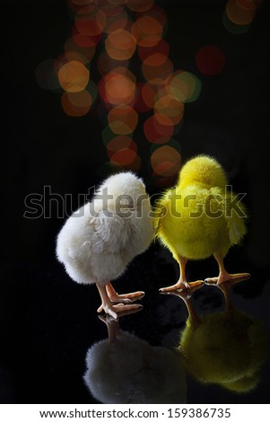 chick with bokeh - stock photo