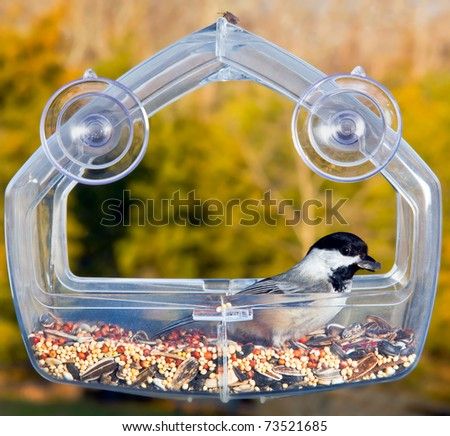 Chickadee perching inside a transparent plastic feeding tray and showing its profile with a sunflower seed in its beak - stock photo