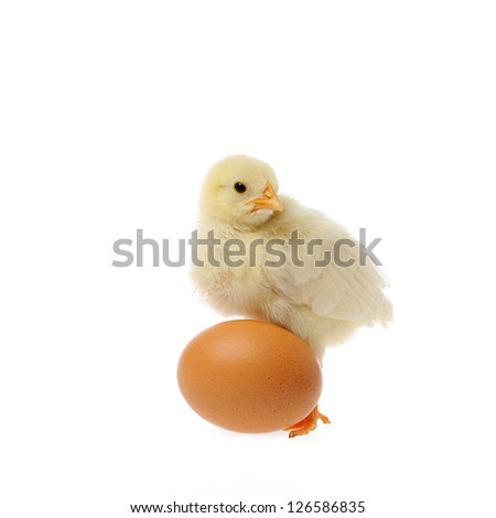 chicken and brown egg