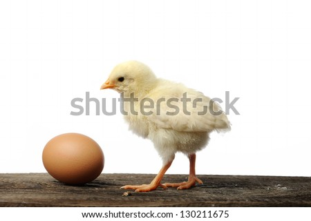 chicken and brown egg - stock photo