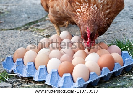 Chicken and freerange eggs in an egg tray - stock photo