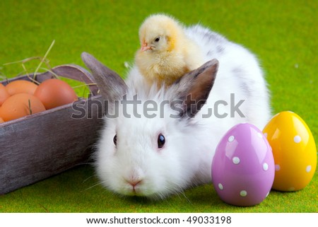chicken, bunny rabbit and painted eggs - stock photo