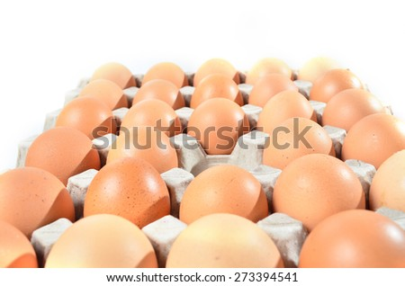 Chicken Egg in Egg Tray