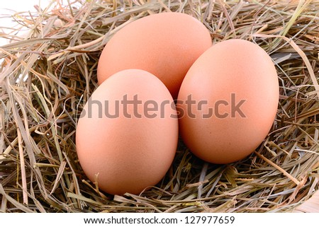 Chicken eggs in hay nest