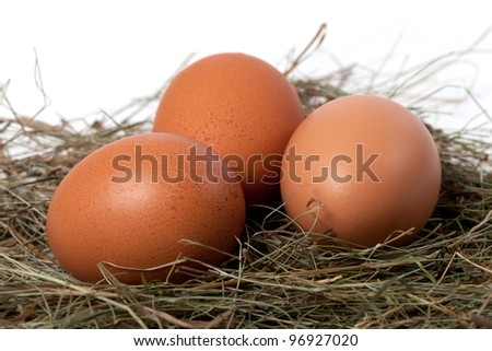 Chicken eggs in nest. Close-up view. - stock photo