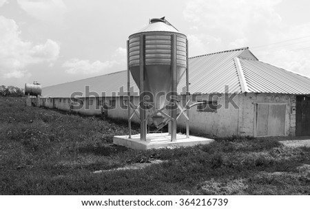 Chicken farm with four grain storage silos for the storage of poultry feed - stock photo