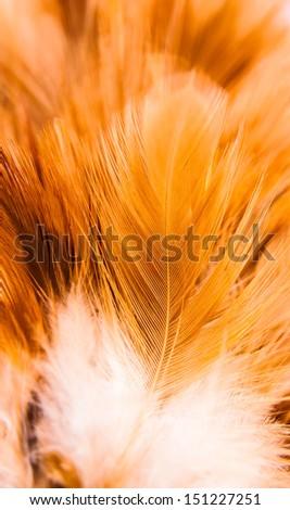 chicken feather texture - stock photo
