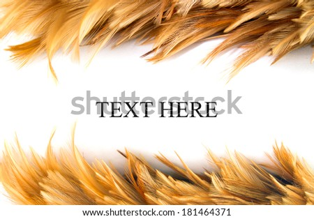 Chicken Feathers Frame isolated on white background - stock photo