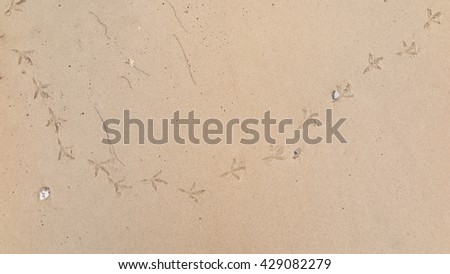 chicken footprints  on the sand beach - stock photo