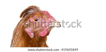 Chicken head ginger close-up on a white background - stock photo