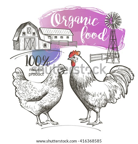 Chicken, hen, rooster, cock, cockerel and farm.  illustration in vintage style. - stock photo