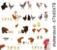 Chicken histories on a white background - stock photo
